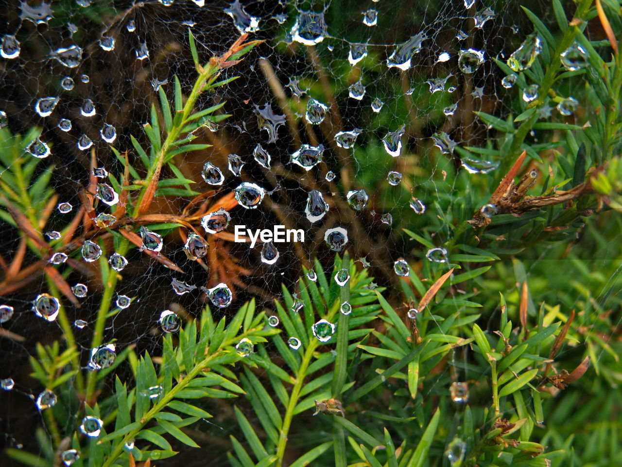 water, plant, leaf, growth, drop, wet, green color, plant part, beauty in nature, nature, close-up, day, no people, animal wildlife, selective focus, animals in the wild, animal themes, animal, rain, raindrop, outdoors, rainy season, dew, purity, leaves