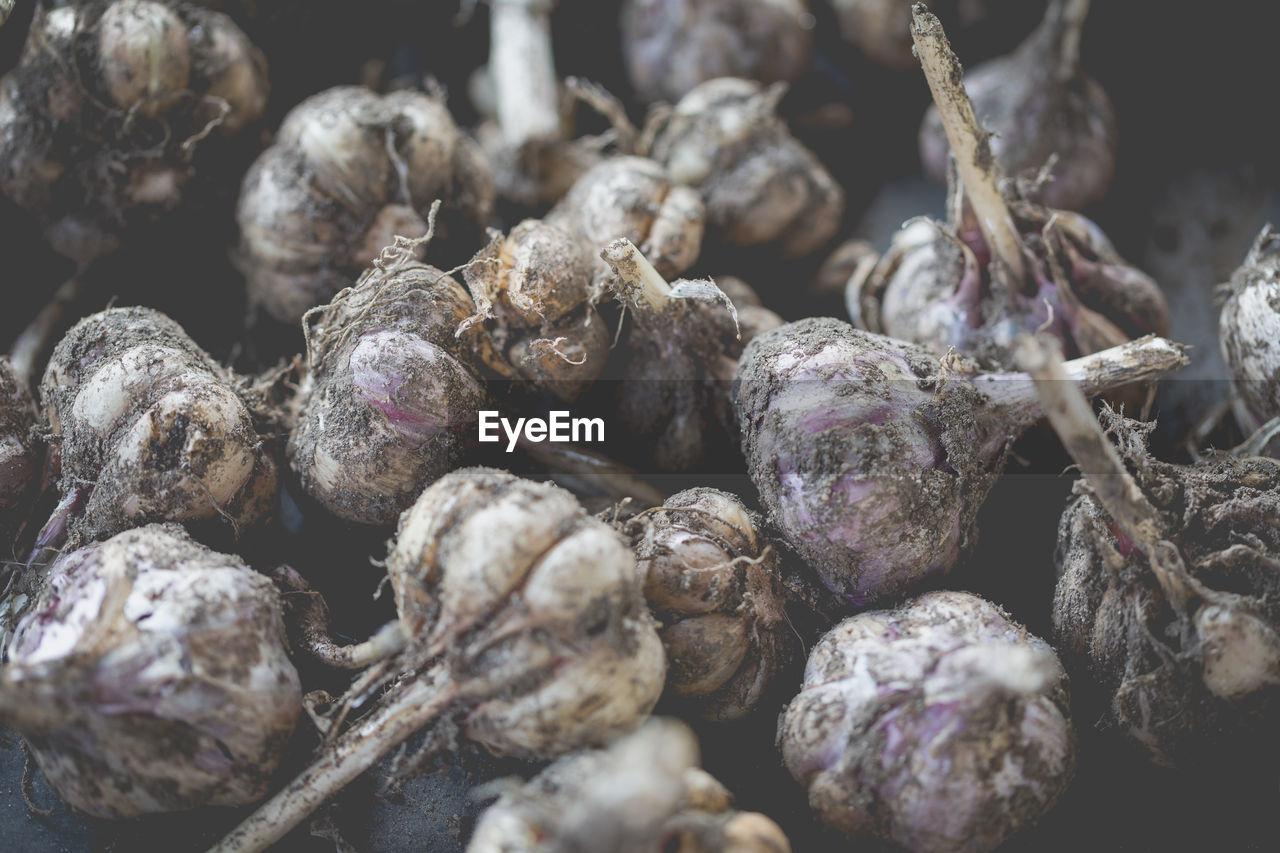 Close-up of garlics