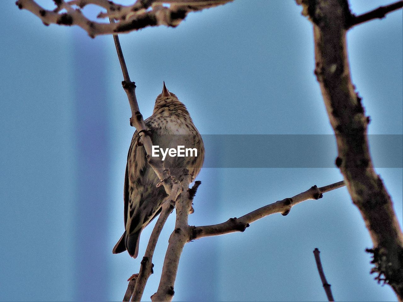 animals in the wild, bird, low angle view, perching, branch, animal themes, no people, day, one animal, nature, animal wildlife, tree, outdoors, clear sky, beauty in nature, close-up, sky