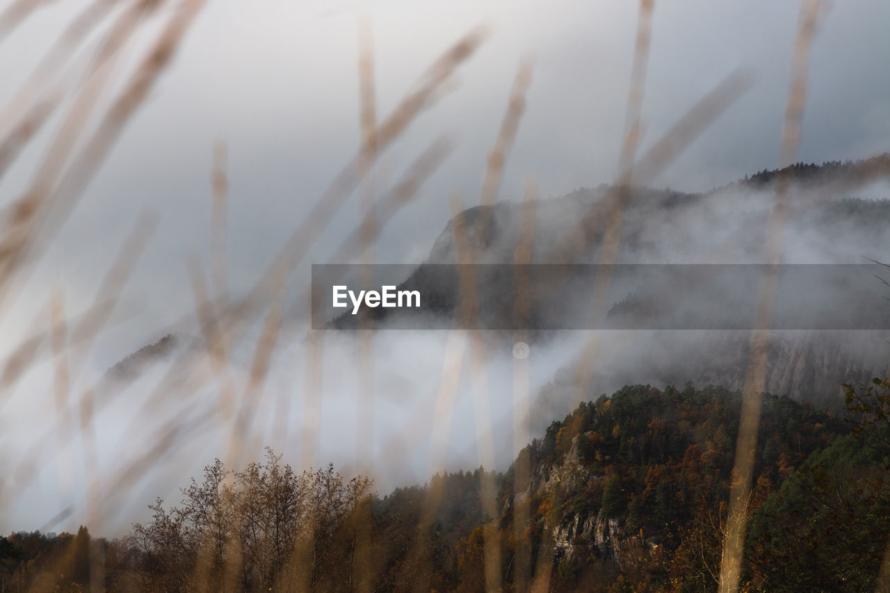 A shot of a local mountian surrounded by fog.