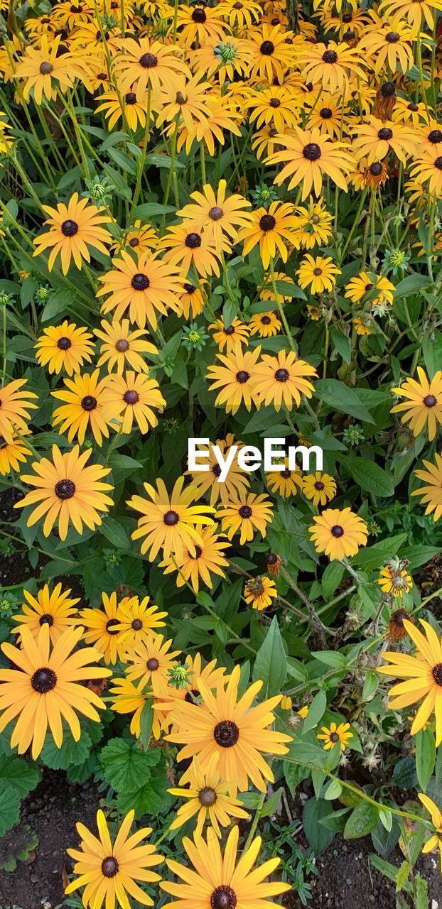 flowering plant, flower, vulnerability, fragility, freshness, plant, yellow, flower head, inflorescence, petal, growth, beauty in nature, high angle view, nature, close-up, no people, day, botany, coneflower, outdoors