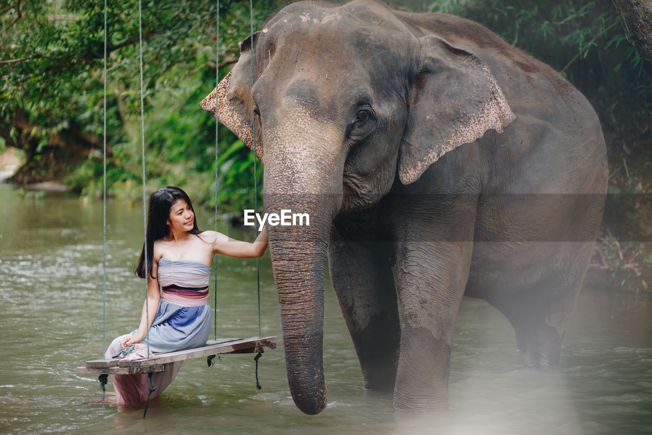 Woman sitting by elephant on swing in river at forest