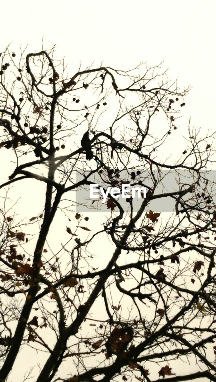branch, nature, beauty in nature, low angle view, no people, tree, growth, flower, outdoors, sky, clear sky, day, fragility, freshness, close-up