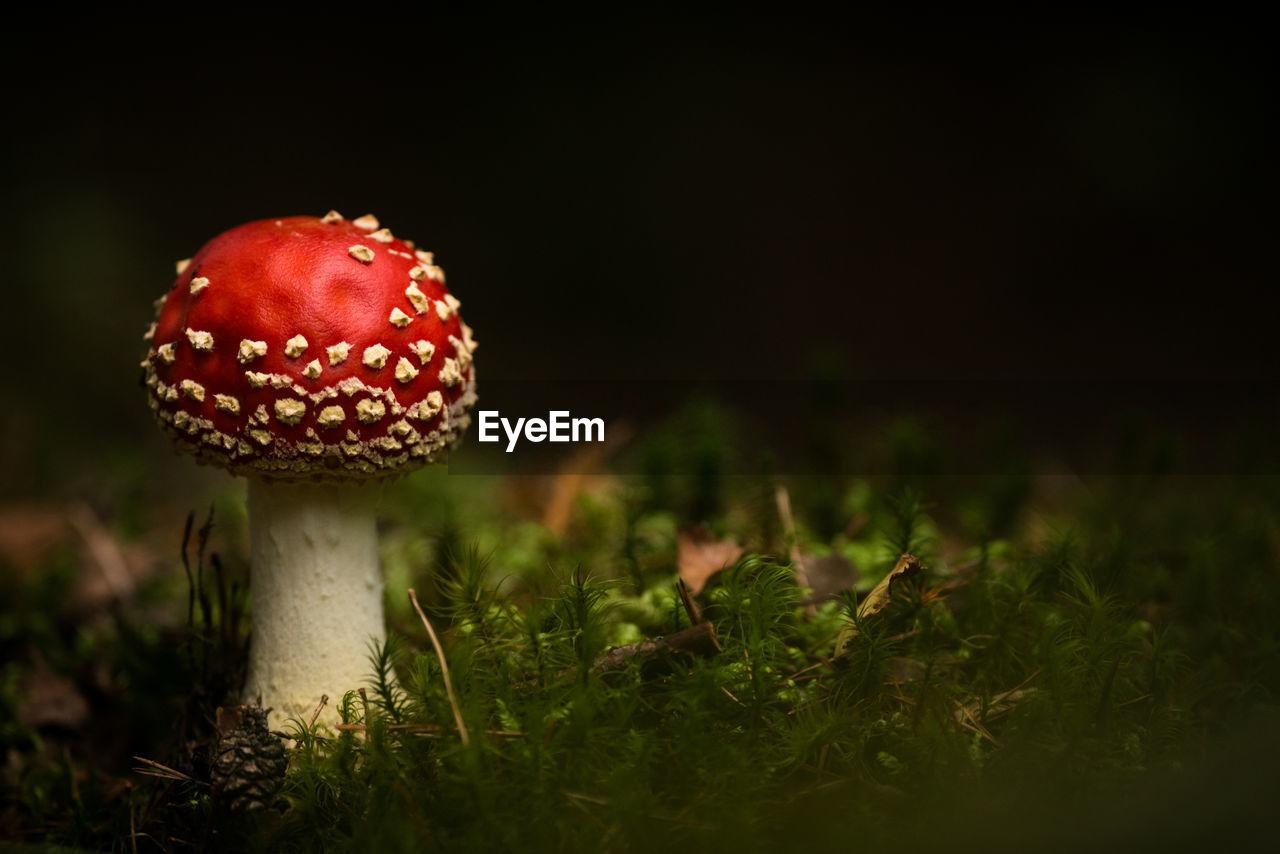 Close-Up Of Mushroom On Field At Night