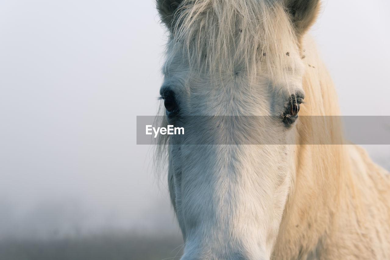 Close-Up Portrait Of White Horse