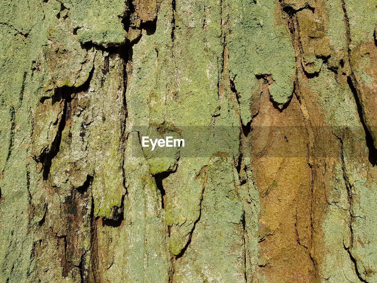textured, backgrounds, tree trunk, full frame, trunk, tree, no people, close-up, rough, day, pattern, plant bark, plant, wood - material, weathered, bark, nature, cracked, outdoors, old, lichen