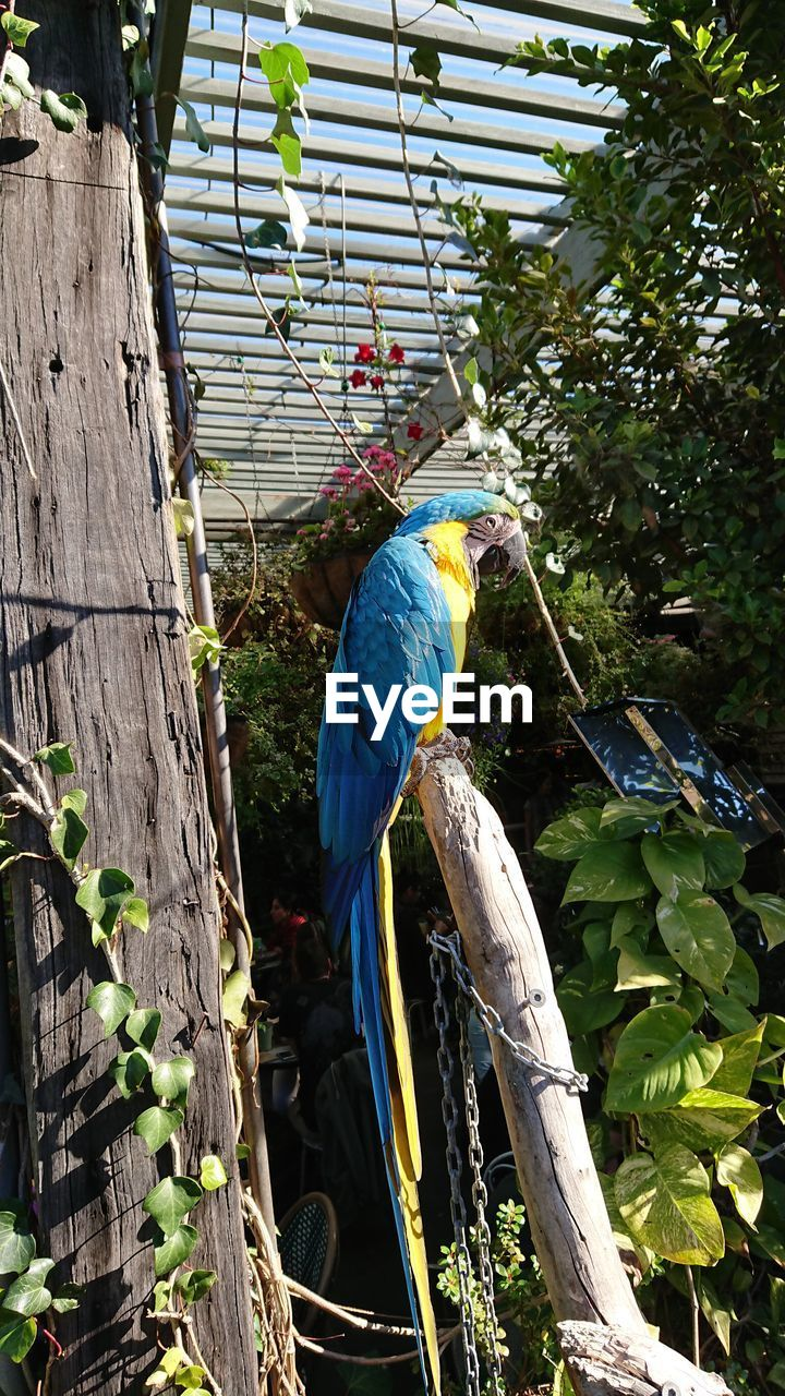 bird, animal themes, parrot, animals in the wild, perching, one animal, gold and blue macaw, animal wildlife, macaw, tree, day, wood - material, outdoors, nature, blue, no people, branch, beauty in nature, close-up