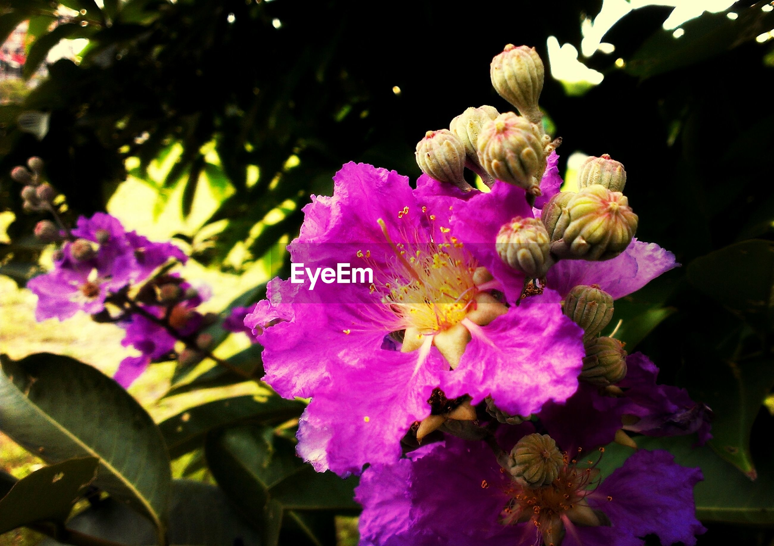 flower, petal, freshness, flower head, fragility, growth, purple, insect, beauty in nature, blooming, focus on foreground, one animal, plant, close-up, nature, pollination, animal themes, animals in the wild, park - man made space, in bloom