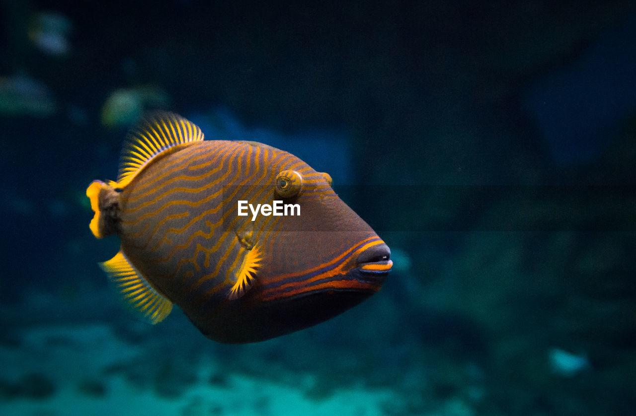Close-up of fish swimming in water at aquarium