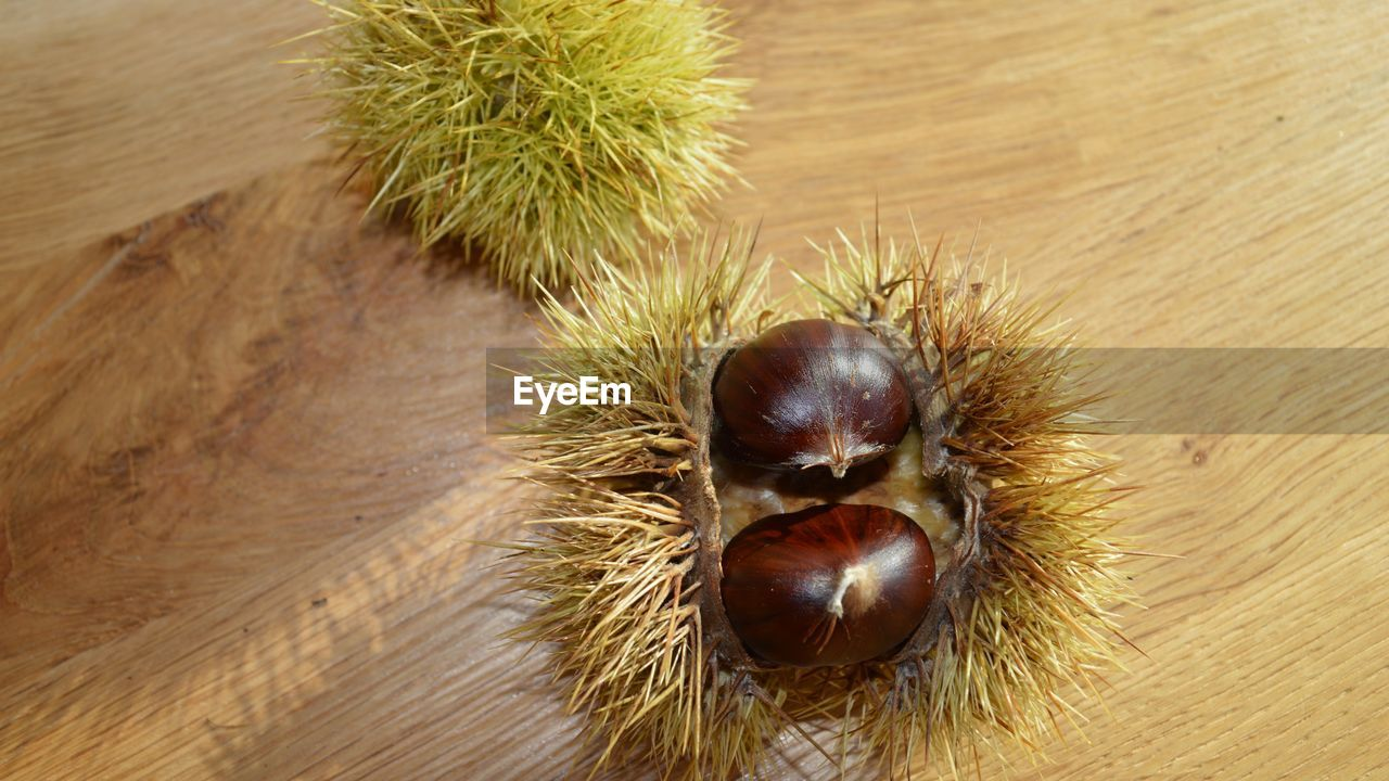 chestnut - food, close-up, chestnut, no people, nut - food, food and drink, nut, food, high angle view, healthy eating, wellbeing, brown, spiked, animal, wood - material, one animal, indoors, freshness, day, table