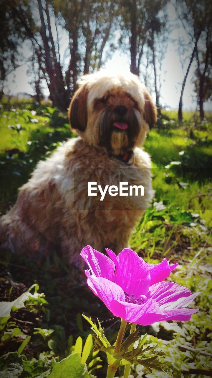 dog, pets, one animal, domestic animals, animal themes, mammal, nature, flower, no people, outdoors, day, focus on foreground, close-up, tree, beauty in nature, grass