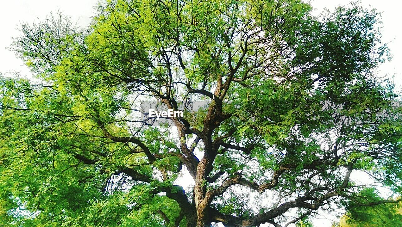 tree, nature, low angle view, branch, green color, day, growth, beauty in nature, tranquility, outdoors, no people, forest, scenics, sky
