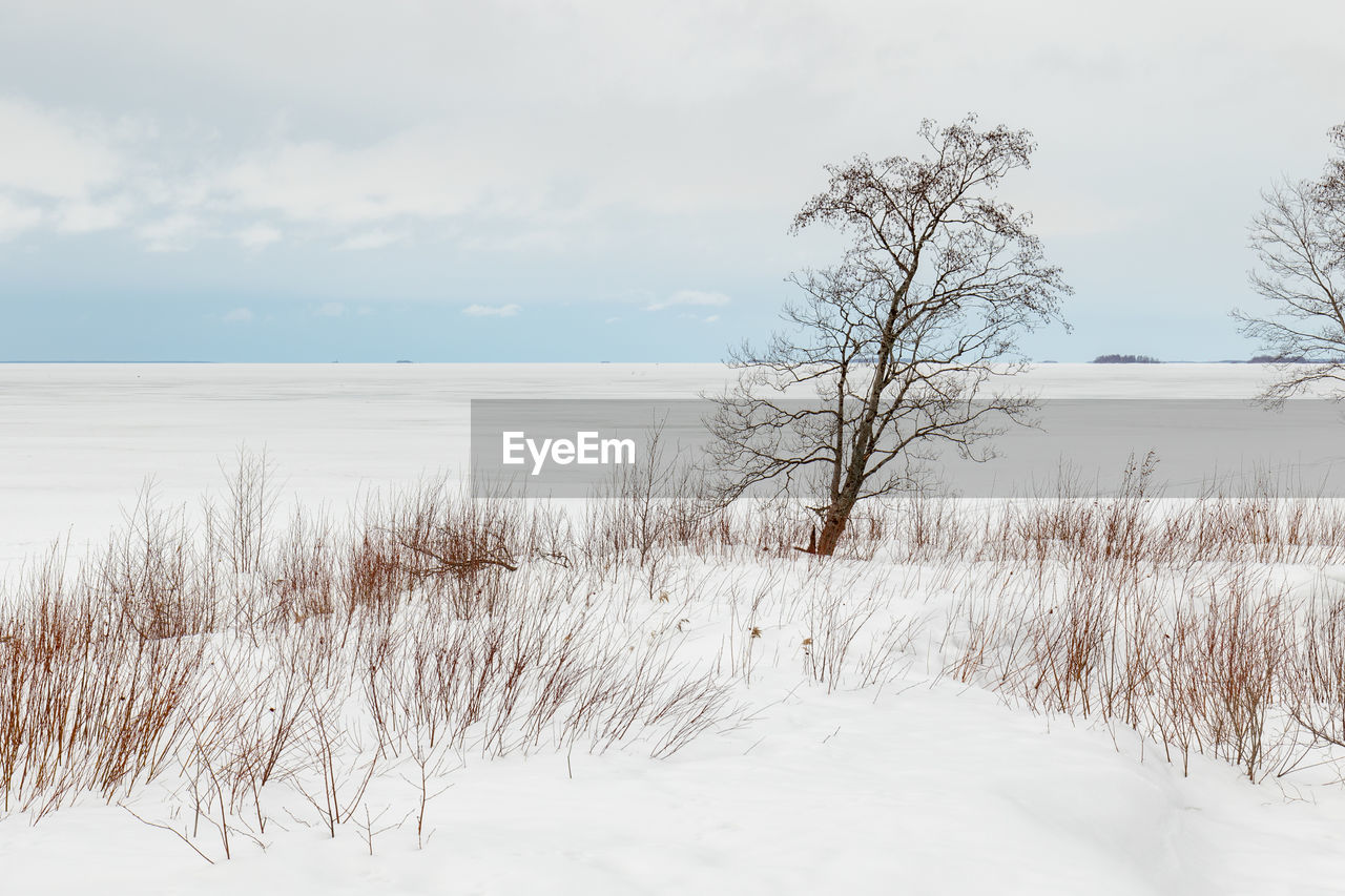 cold temperature, winter, sky, beauty in nature, snow, tranquil scene, scenics - nature, tranquility, tree, plant, nature, no people, cloud - sky, land, bare tree, non-urban scene, water, environment, covering, outdoors, marram grass