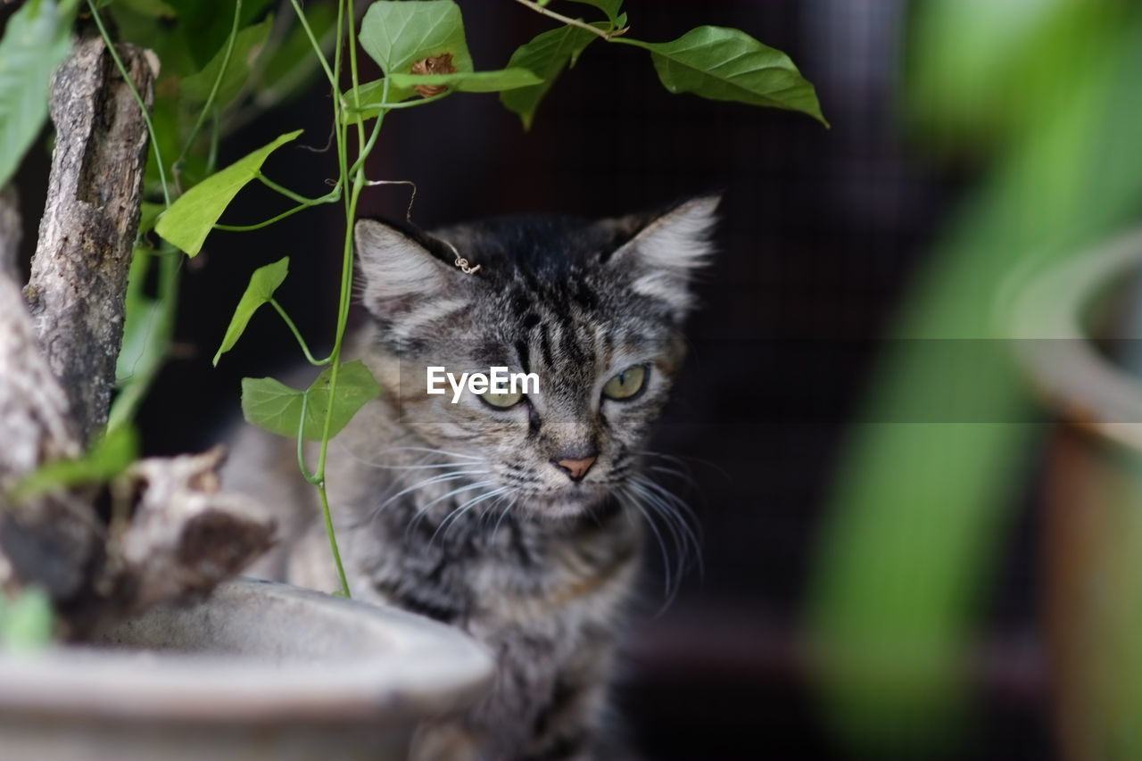animal themes, cat, animal, mammal, feline, domestic animals, one animal, domestic, domestic cat, pets, vertebrate, no people, selective focus, leaf, plant part, portrait, looking at camera, whisker, young animal, day, kitten, animal head