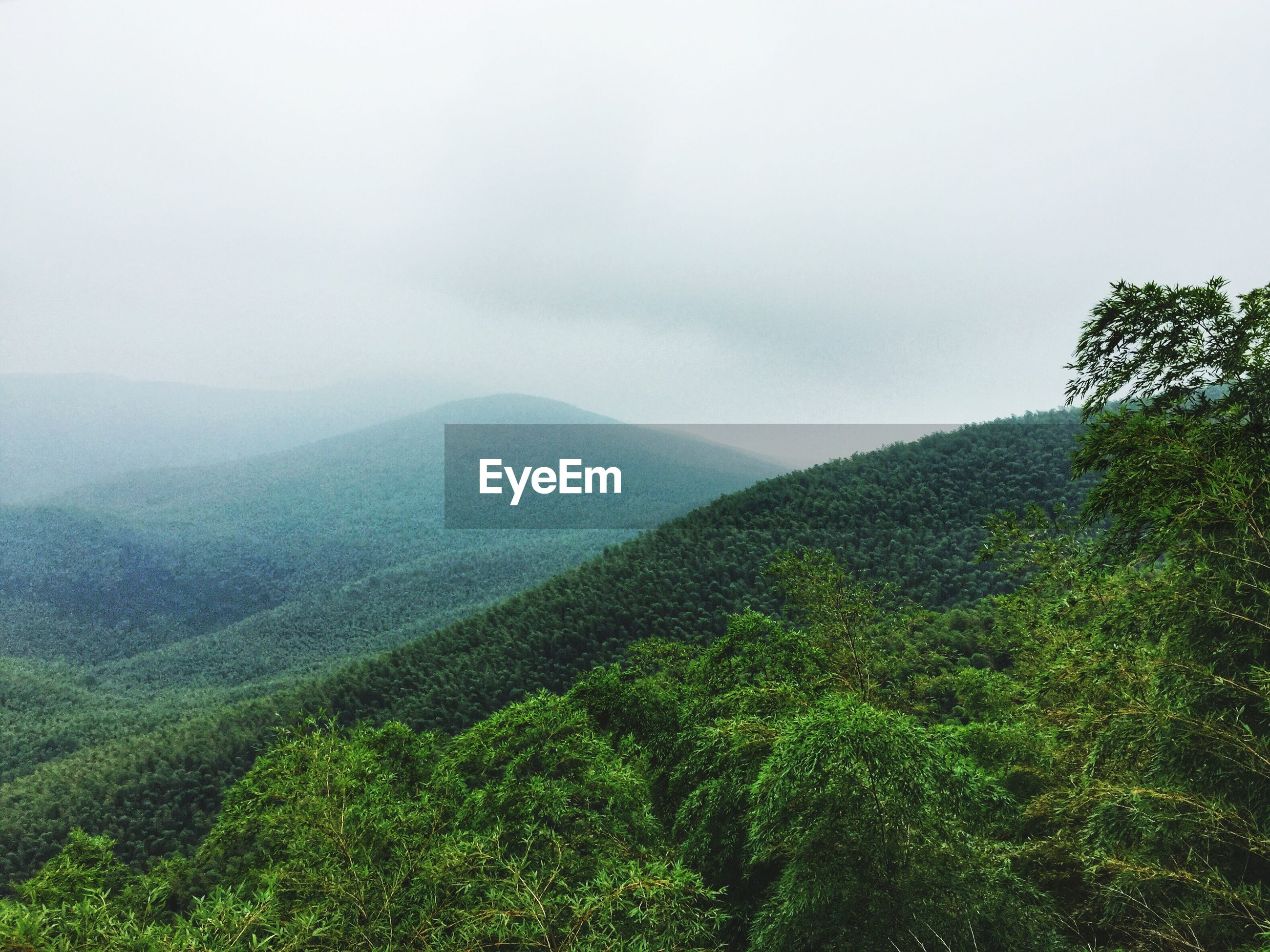 Scenic view of tree mountains during foggy weather