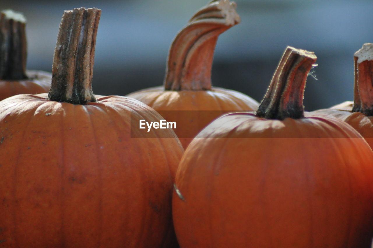 Close-up of pumpkins for sale