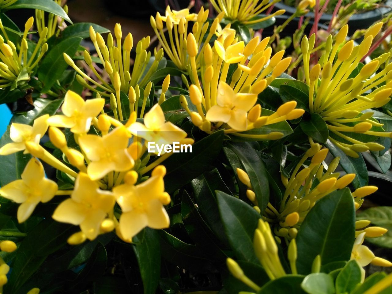 flower, nature, plant, yellow, petal, growth, beauty in nature, freshness, fragility, no people, flower head, close-up, outdoors, blooming, day