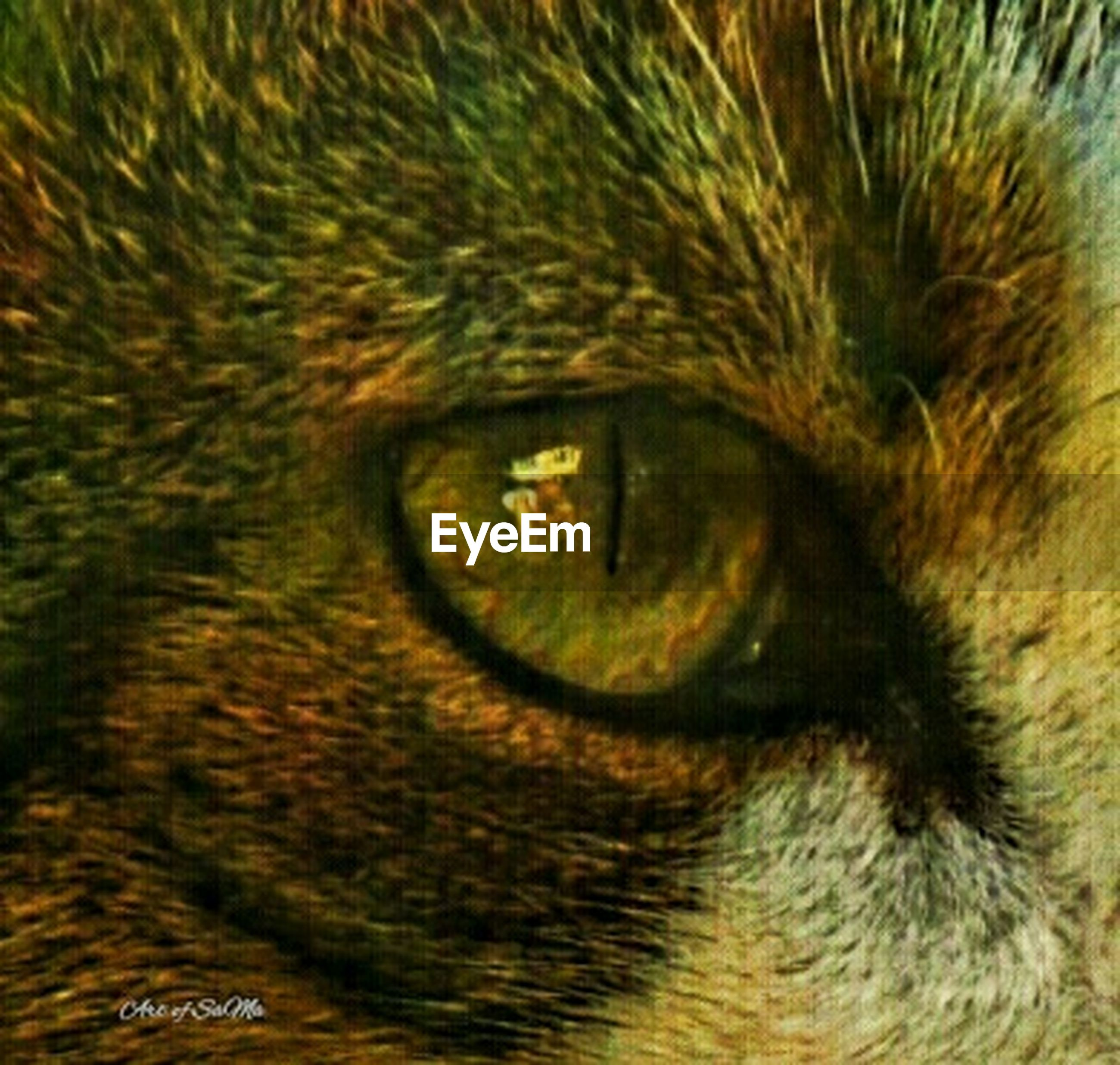 one animal, mammal, animal themes, domestic animals, pets, animal head, domestic cat, close-up, animal body part, cat, animal eye, feline, whisker, full frame, looking at camera, part of, portrait, extreme close-up, backgrounds, staring