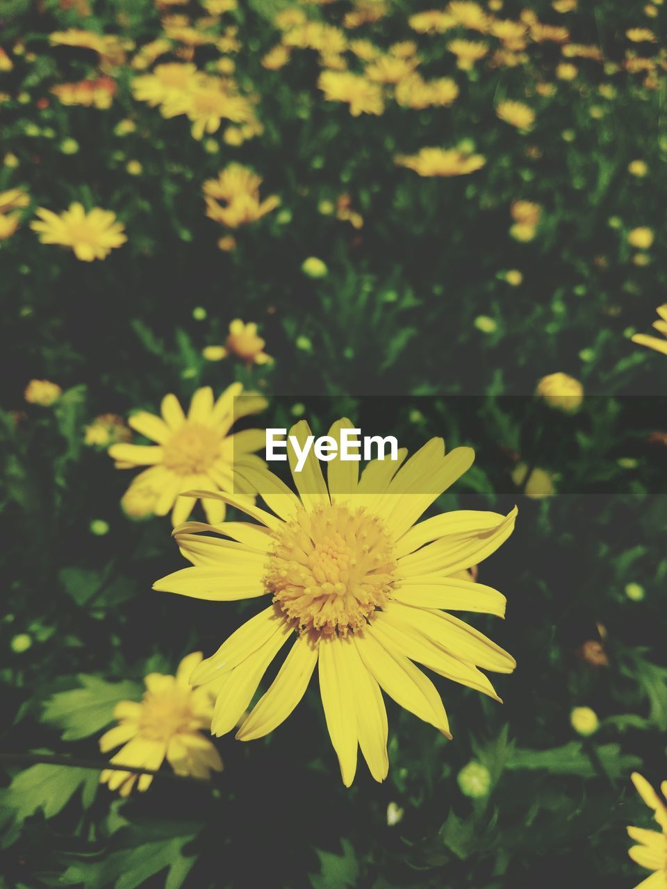 flower, yellow, nature, beauty in nature, growth, petal, plant, fragility, flower head, freshness, blooming, outdoors, no people, day, close-up