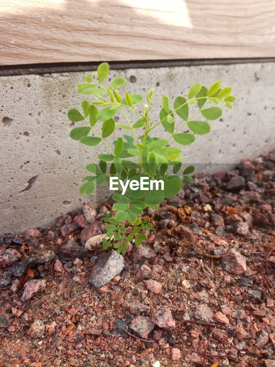growth, leaf, plant part, plant, nature, dirt, no people, beginnings, agriculture, day, green color, vegetable, high angle view, food, food and drink, seedling, outdoors, close-up, land, freshness, gardening, mud, small