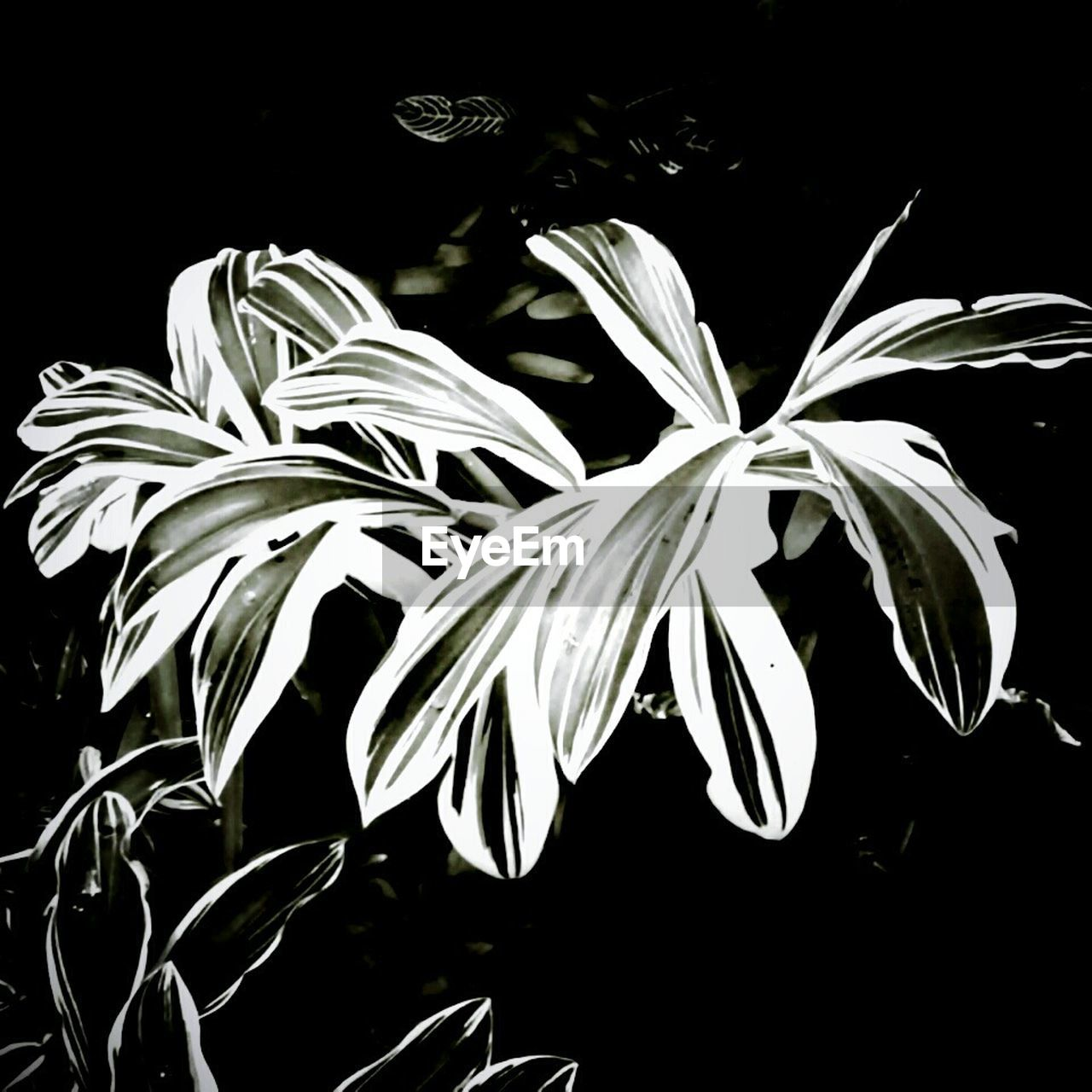 growth, flora, night, plant, leaf, black background, nature, no people, close-up, outdoors
