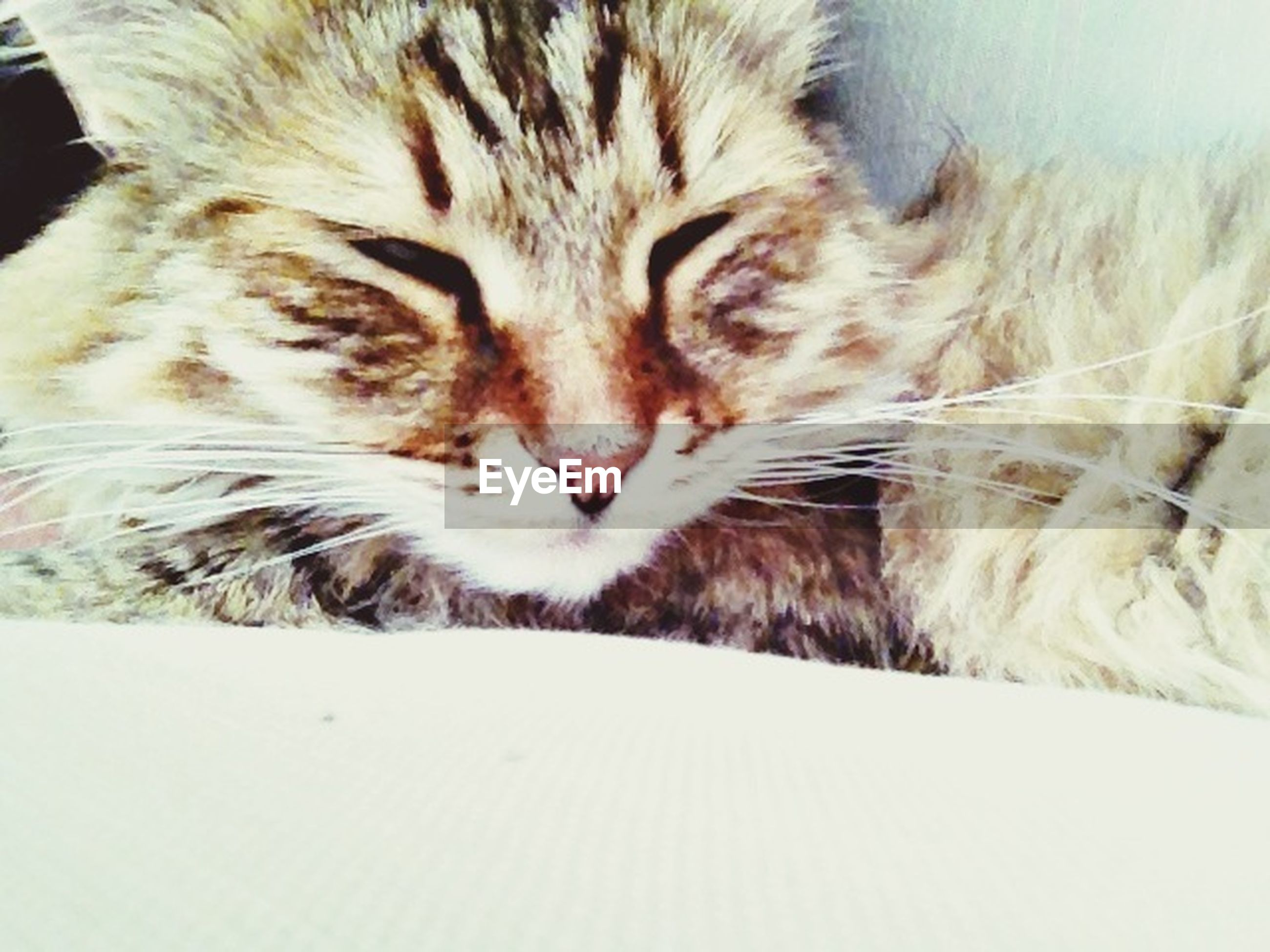 domestic cat, pets, domestic animals, animal themes, mammal, one animal, cat, feline, relaxation, indoors, whisker, resting, sleeping, lying down, eyes closed, close-up, animal head, animal body part, bed, comfortable