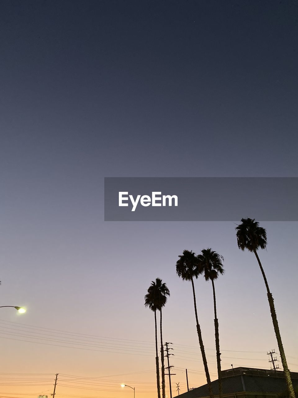 sky, palm tree, tropical climate, silhouette, tree, sunset, low angle view, plant, copy space, beauty in nature, no people, nature, clear sky, tall - high, tranquility, scenics - nature, coconut palm tree, growth, outdoors, dusk, electricity, tropical tree