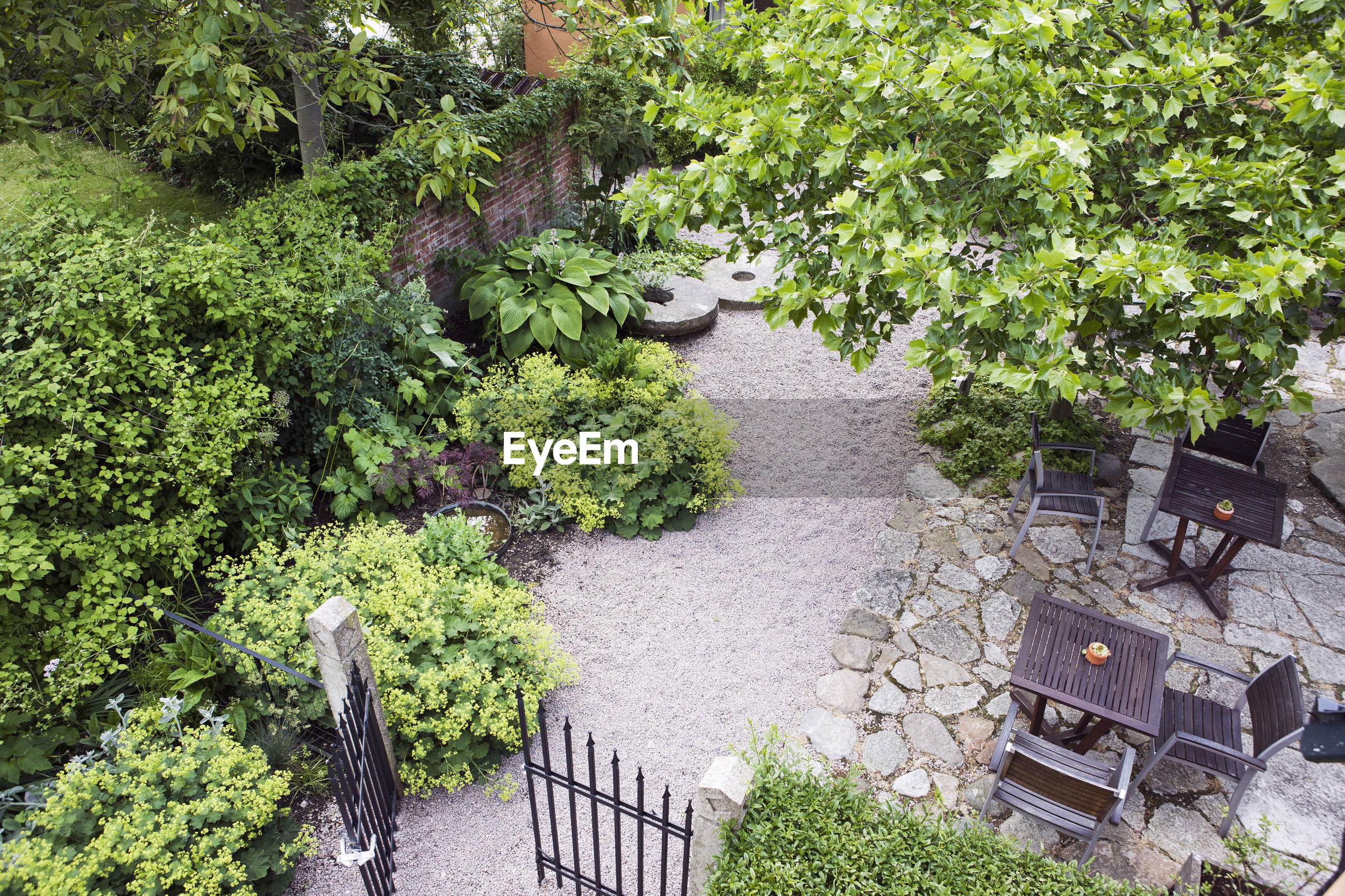 HIGH ANGLE VIEW OF PLANTS IN GARDEN