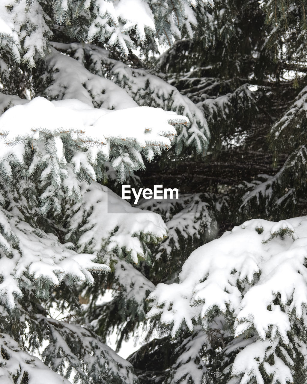 CLOSE-UP OF FROZEN TREES