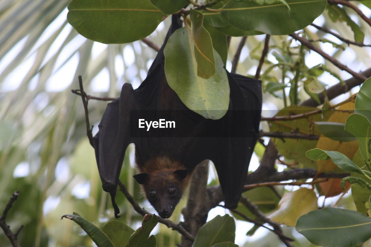 Close Up Of Bat In Tree