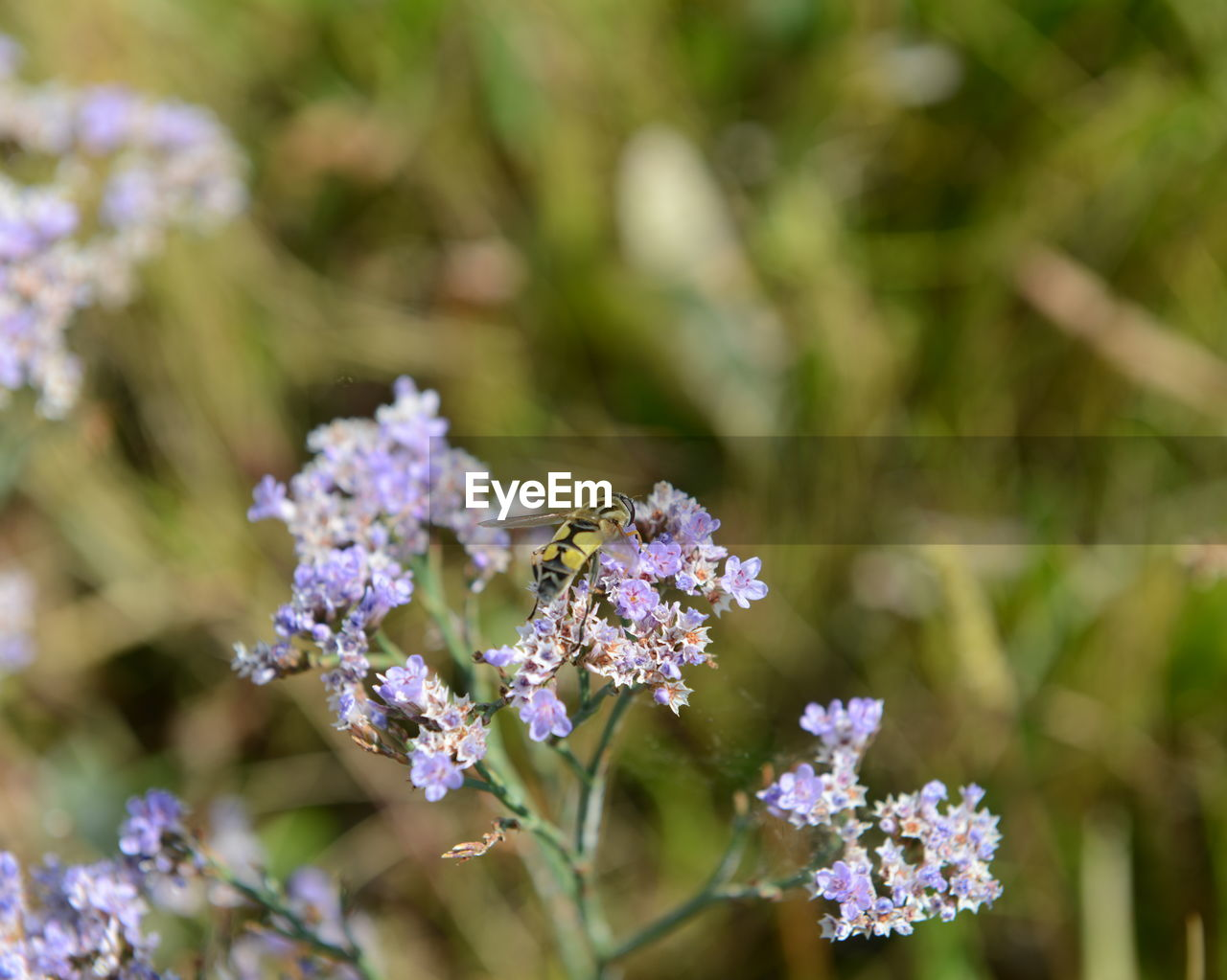 flower, beauty in nature, nature, fragility, day, purple, focus on foreground, growth, no people, outdoors, plant, close-up, freshness, blooming, flower head
