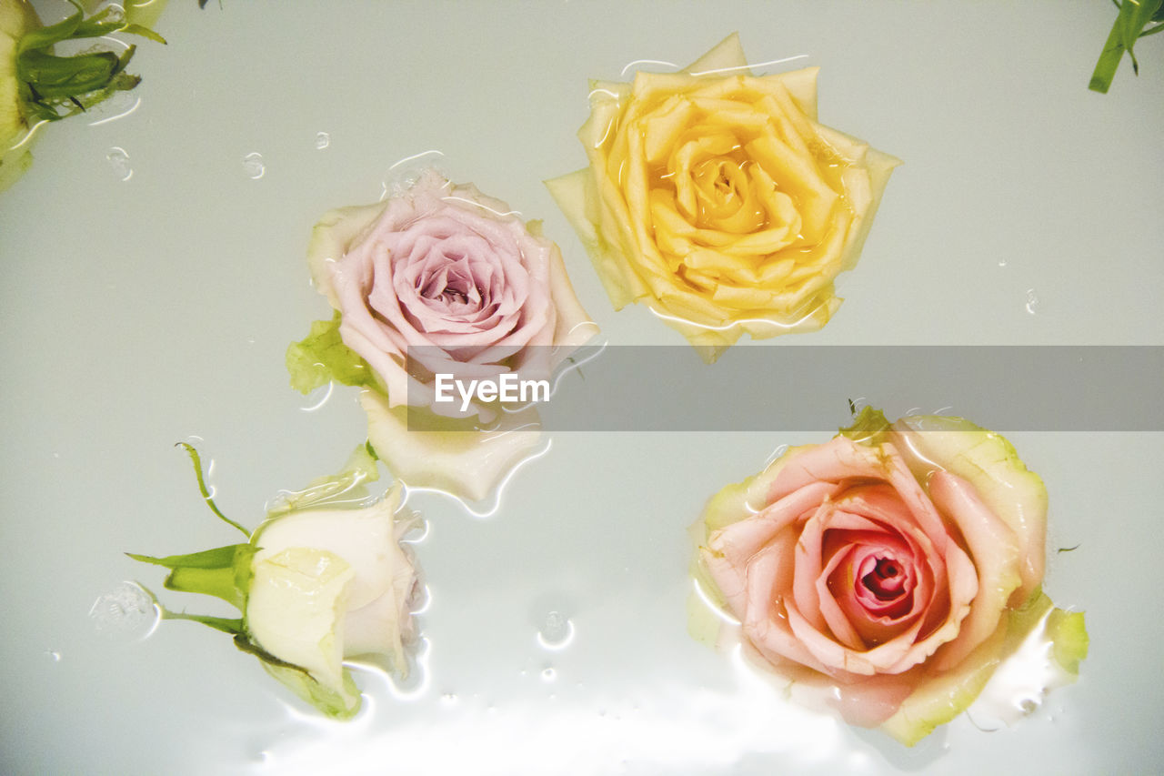 Close-Up  Of Roses Floating In Water
