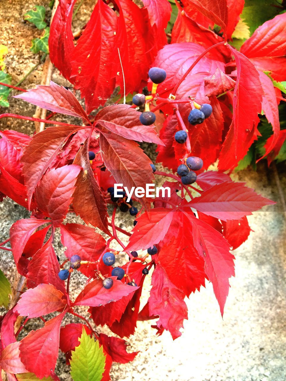 nature, day, growth, outdoors, leaf, beauty in nature, no people, red, close-up, fragility, freshness, flower, flower head