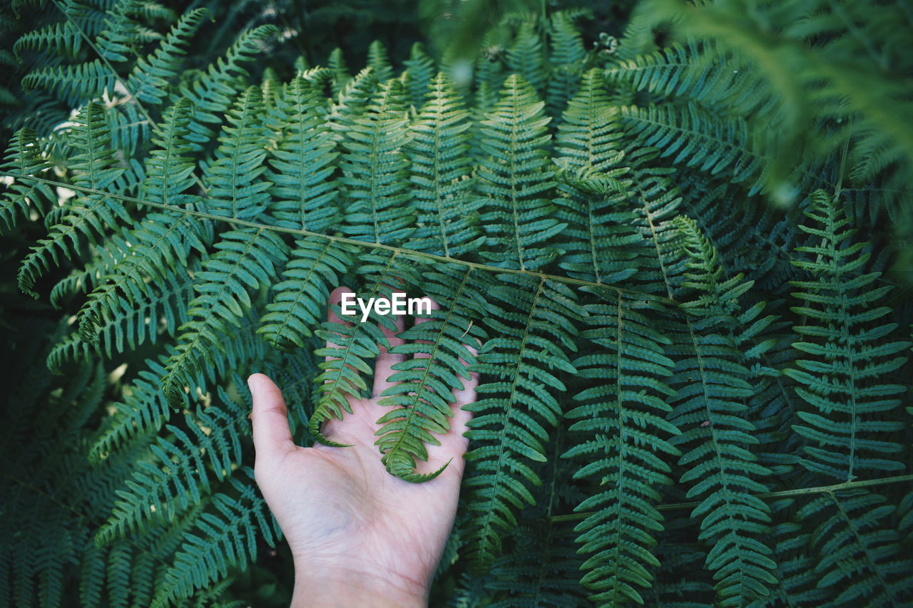 Close-Up Of Hand Touching Fern Leaf