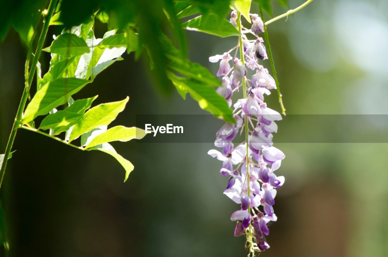 nature, growth, beauty in nature, plant, fragility, green color, purple, day, freshness, leaf, no people, outdoors, focus on foreground, flower, close-up