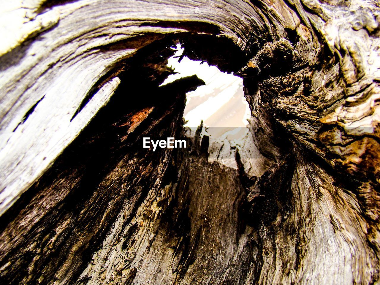 tree trunk, textured, bark, rough, tree, knotted wood, nature, geology, wood - material, no people, full frame, cave, day, close-up, beauty in nature, stalactite, backgrounds, outdoors