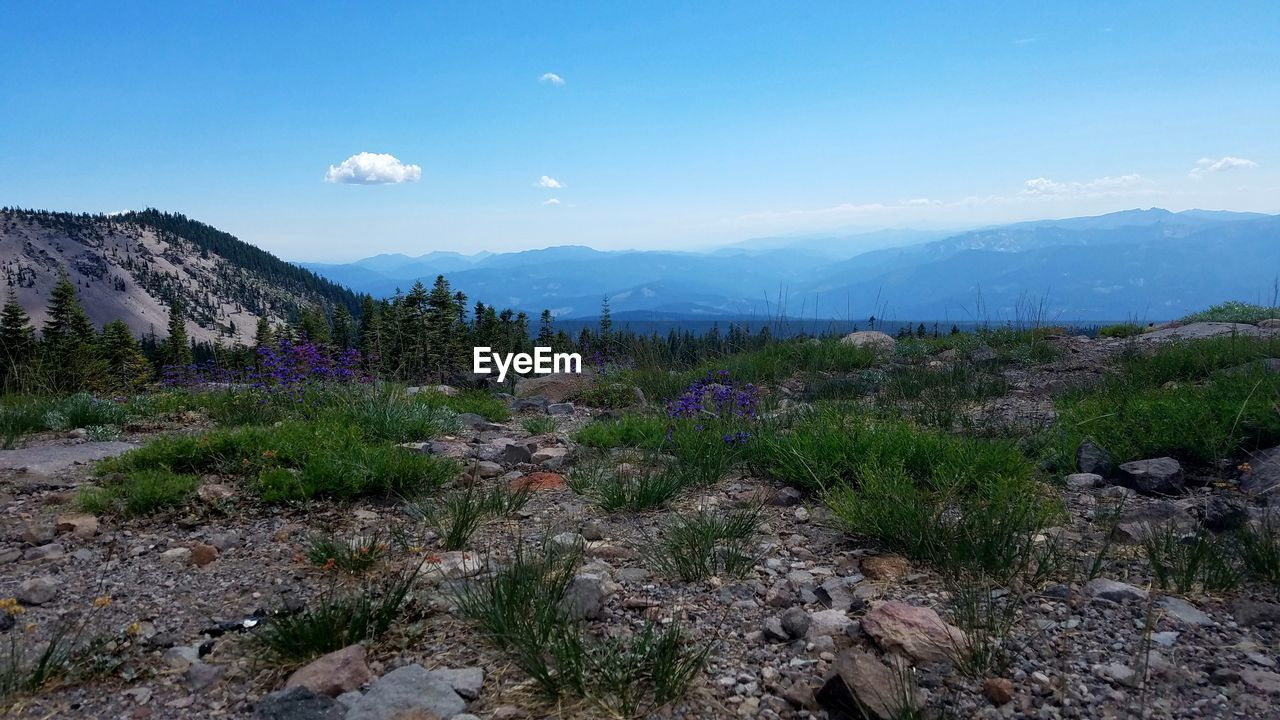 mountain, sky, plant, beauty in nature, scenics - nature, environment, landscape, tranquil scene, tranquility, nature, mountain range, tree, growth, non-urban scene, day, cloud - sky, no people, land, flower, flowering plant, outdoors, mountain peak