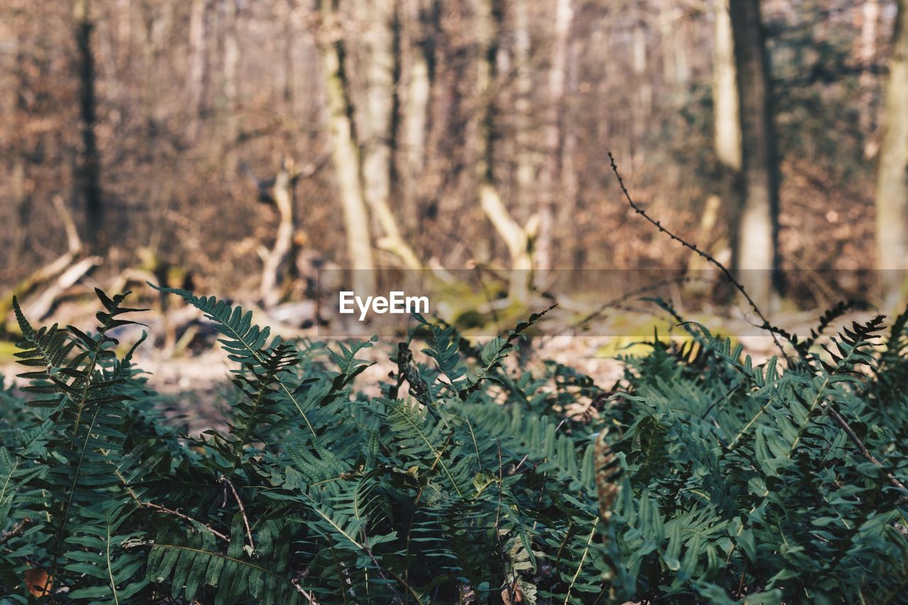 View of fern leaves in forest