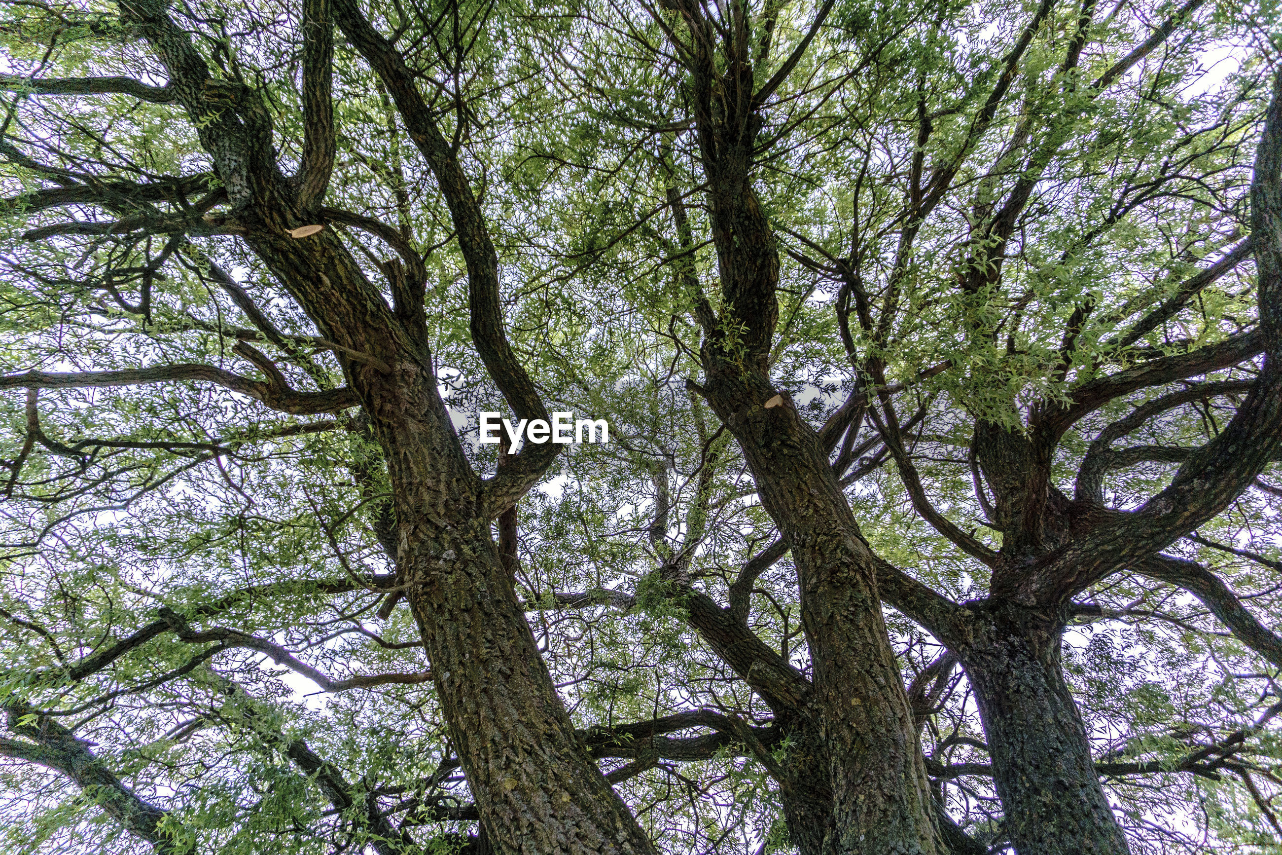 LOW ANGLE VIEW OF TREE IN FOREST AGAINST SKY