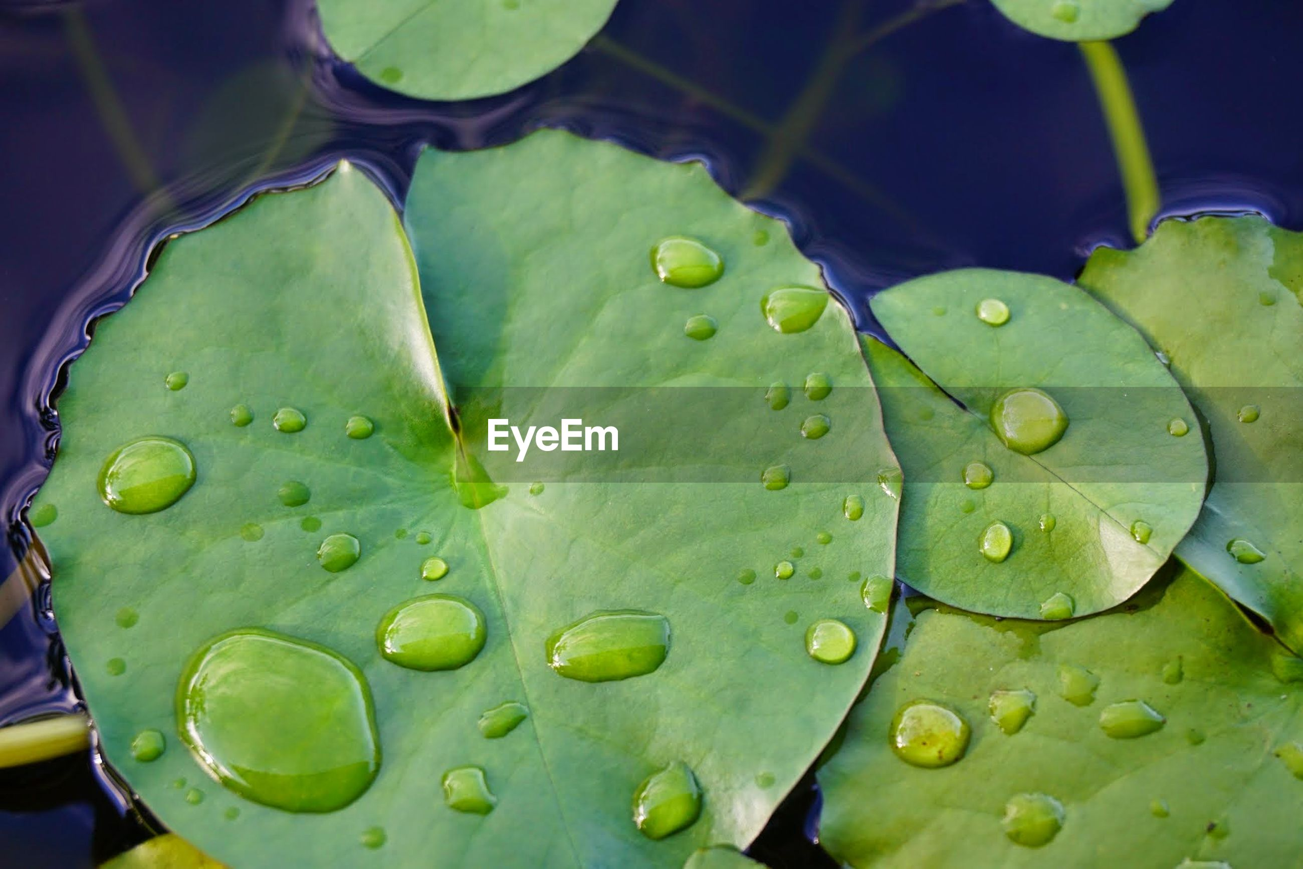 leaf, green color, water, drop, freshness, close-up, leaf vein, growth, leaves, nature, plant, green, fragility, beauty in nature, no people, selective focus, day, natural pattern, focus on foreground, outdoors, detail, tranquility, weather