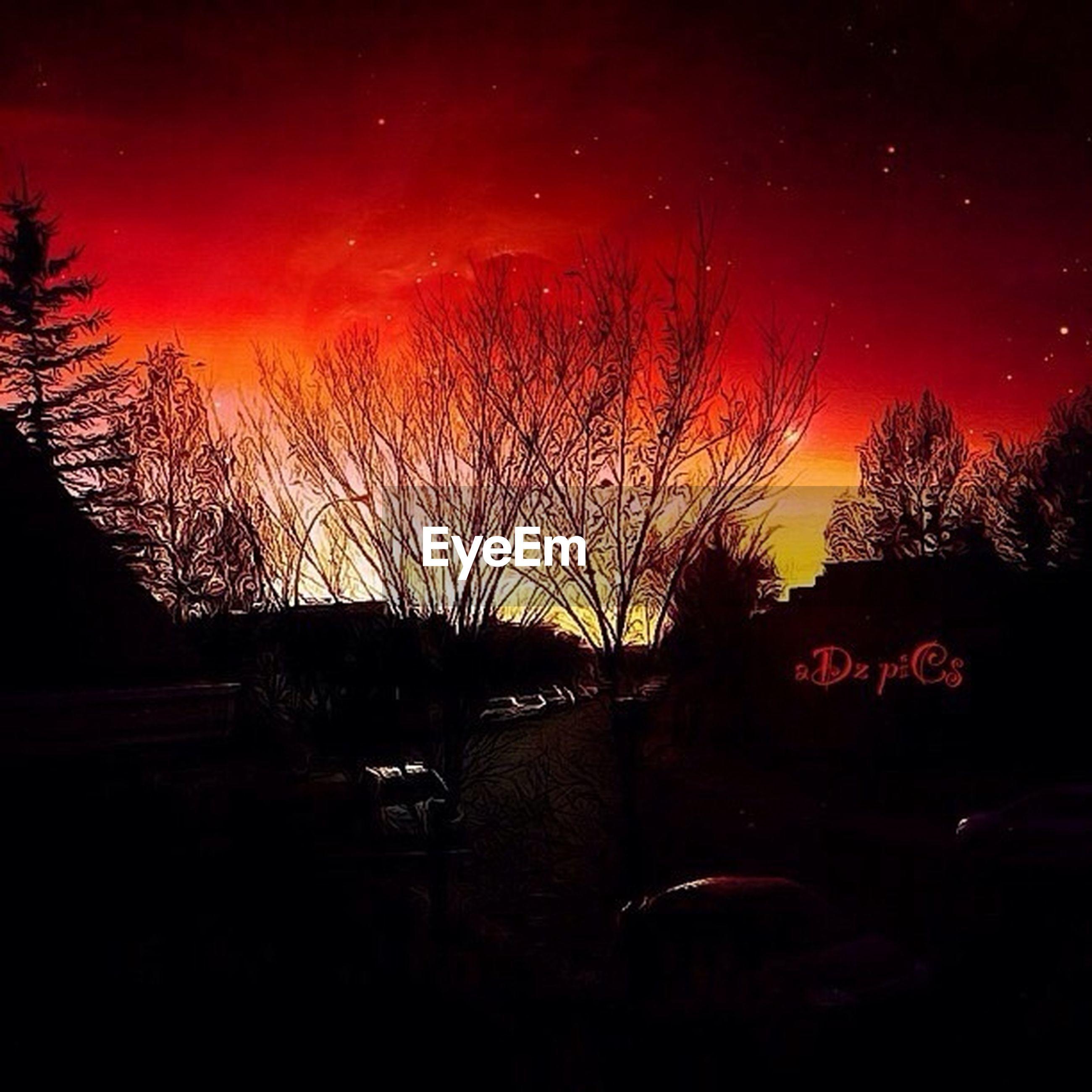 sunset, silhouette, sky, tree, orange color, night, bare tree, scenics, illuminated, dark, tranquility, tranquil scene, beauty in nature, nature, dusk, idyllic, dramatic sky, outdoors, no people, branch