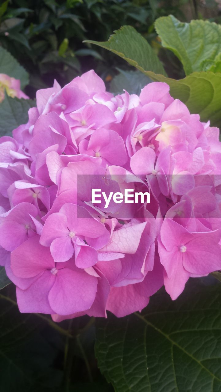 flower, nature, plant, beauty in nature, petal, growth, pink color, blooming, no people, fragility, outdoors, close-up, freshness, flower head, day