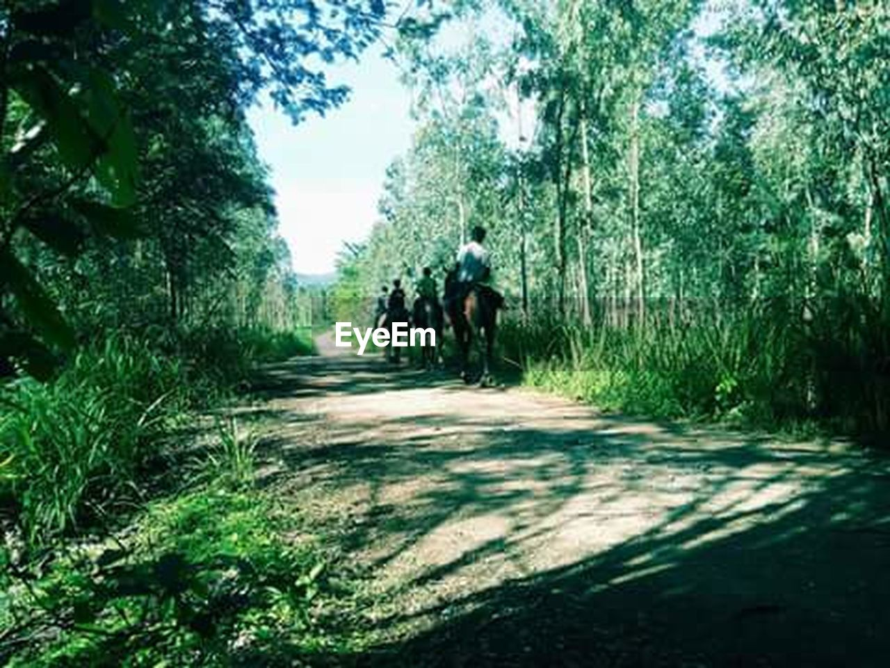 tree, animal themes, domestic animals, riding, rear view, walking, nature, horseback riding, one animal, people, outdoors, the way forward, forest, road, adult, day, mammal, adventure, pets, grass, adults only, only men