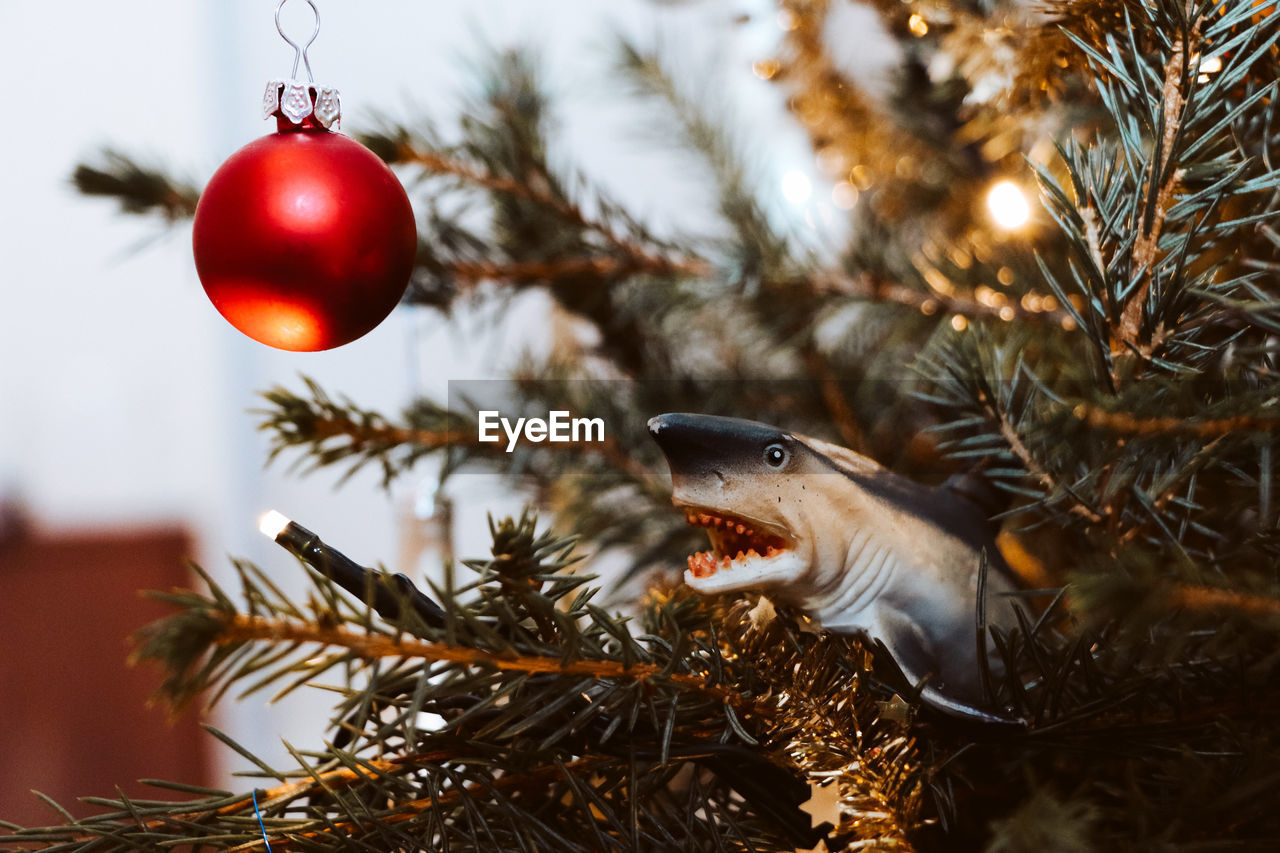 christmas, christmas decoration, holiday, celebration, christmas tree, tree, christmas ornament, decoration, animal, holiday - event, focus on foreground, red, no people, selective focus, plant, close-up, animal themes, vertebrate, indoors