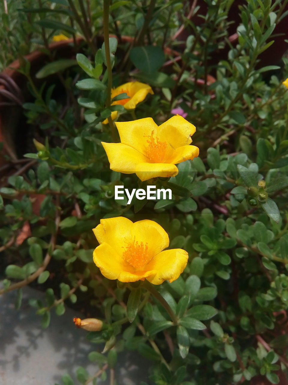 yellow, flower, growth, nature, plant, petal, beauty in nature, freshness, fragility, leaf, flower head, no people, blooming, outdoors, green color, day, close-up