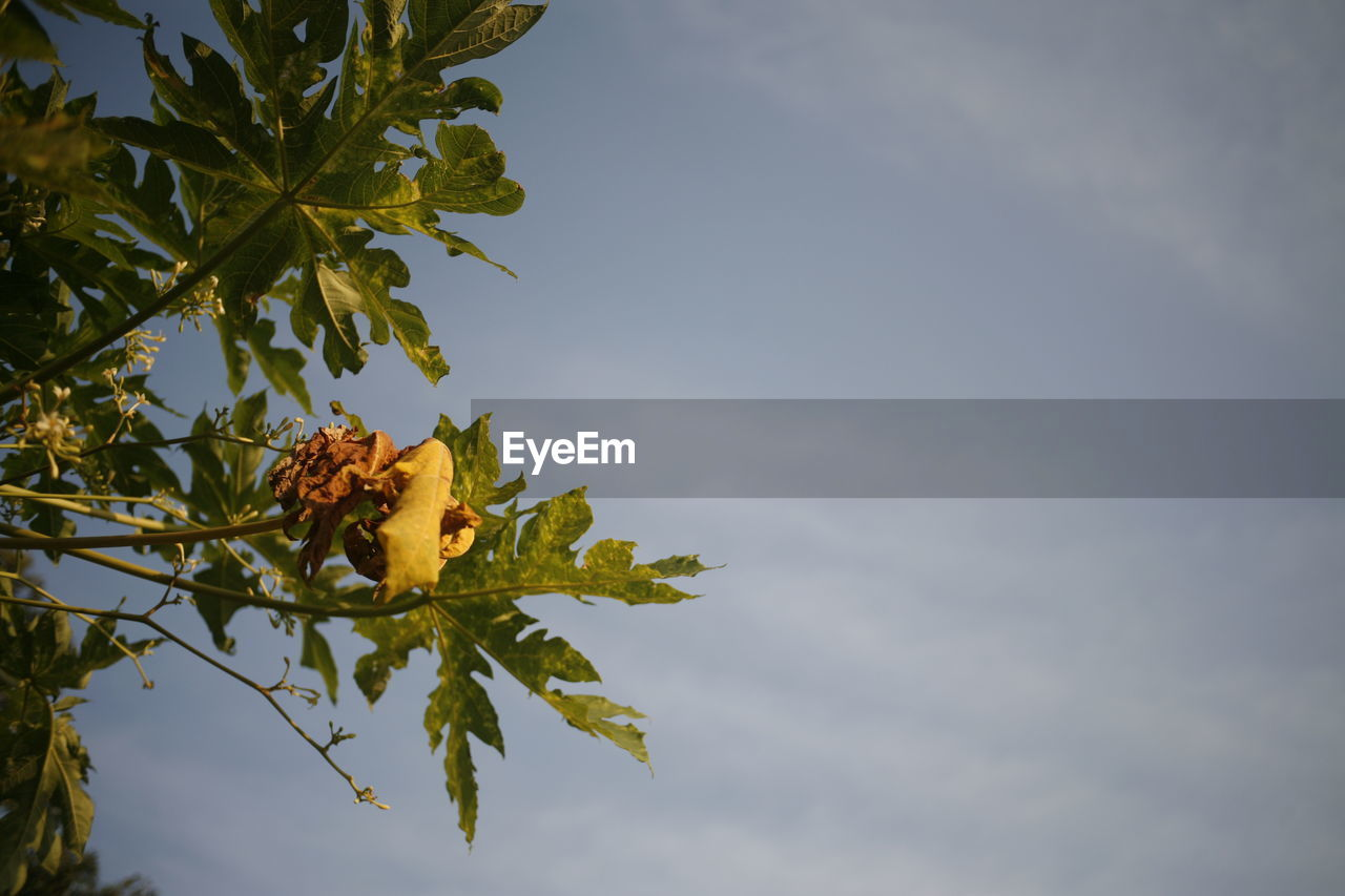 plant, sky, growth, plant part, leaf, beauty in nature, cloud - sky, nature, tree, low angle view, no people, tranquility, day, close-up, outdoors, yellow, green color, flower, freshness, fragility, leaves