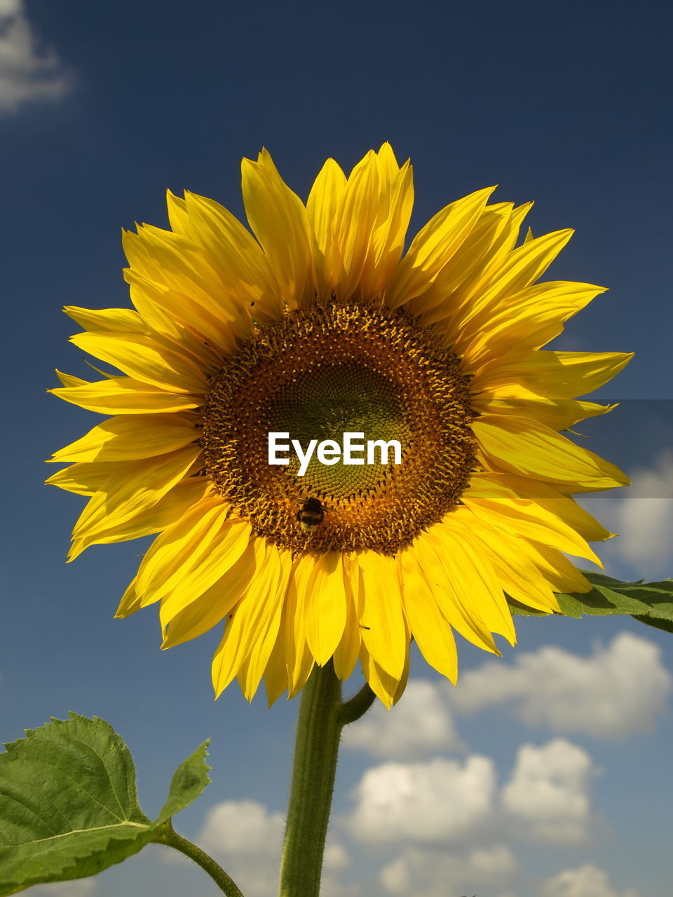 flower, yellow, fragility, petal, beauty in nature, nature, freshness, growth, sunflower, flower head, outdoors, plant, day, no people, close-up, sky, leaf, blooming