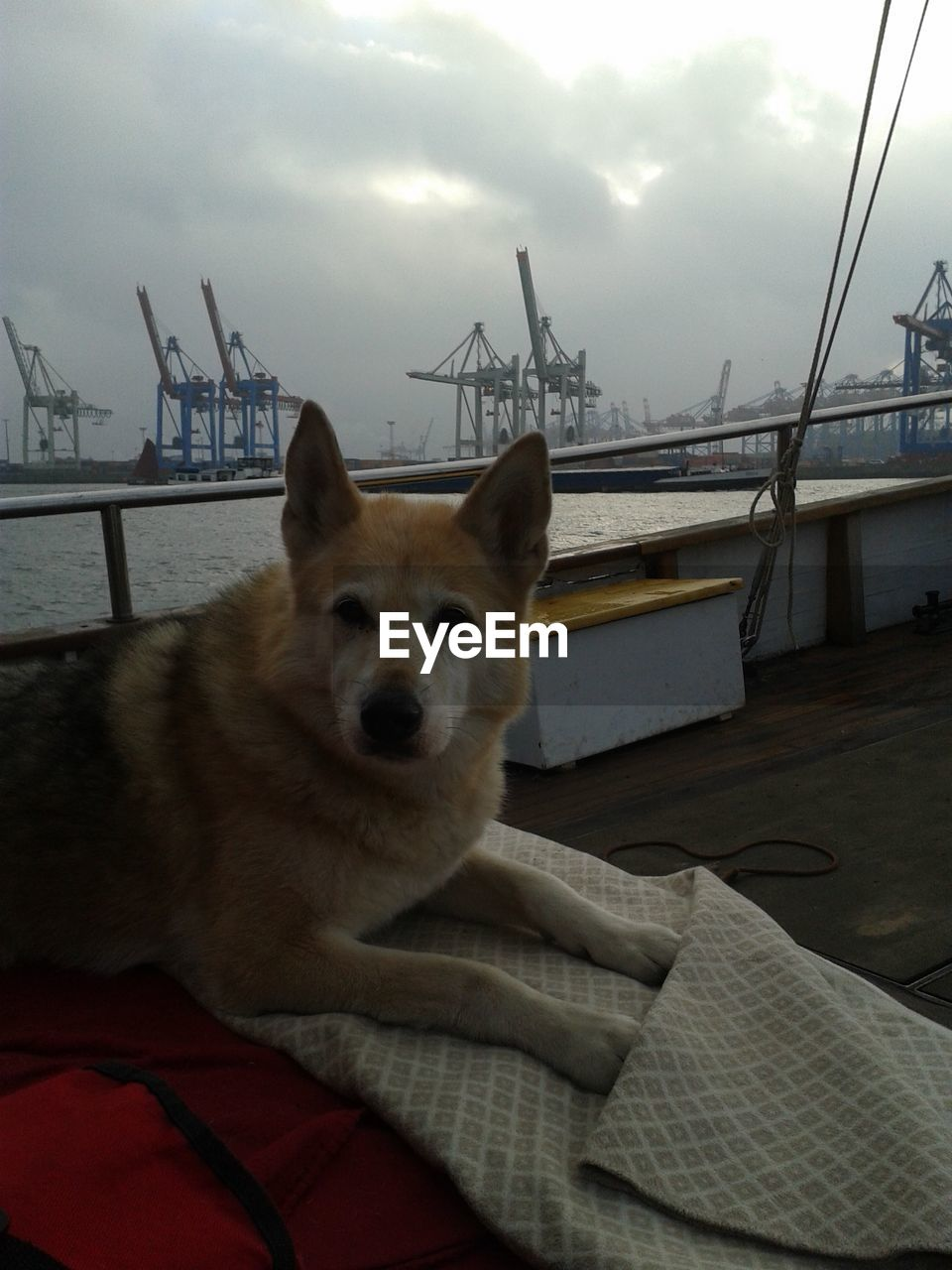 Portrait Of Akita On Boat Against Cloudy Sky