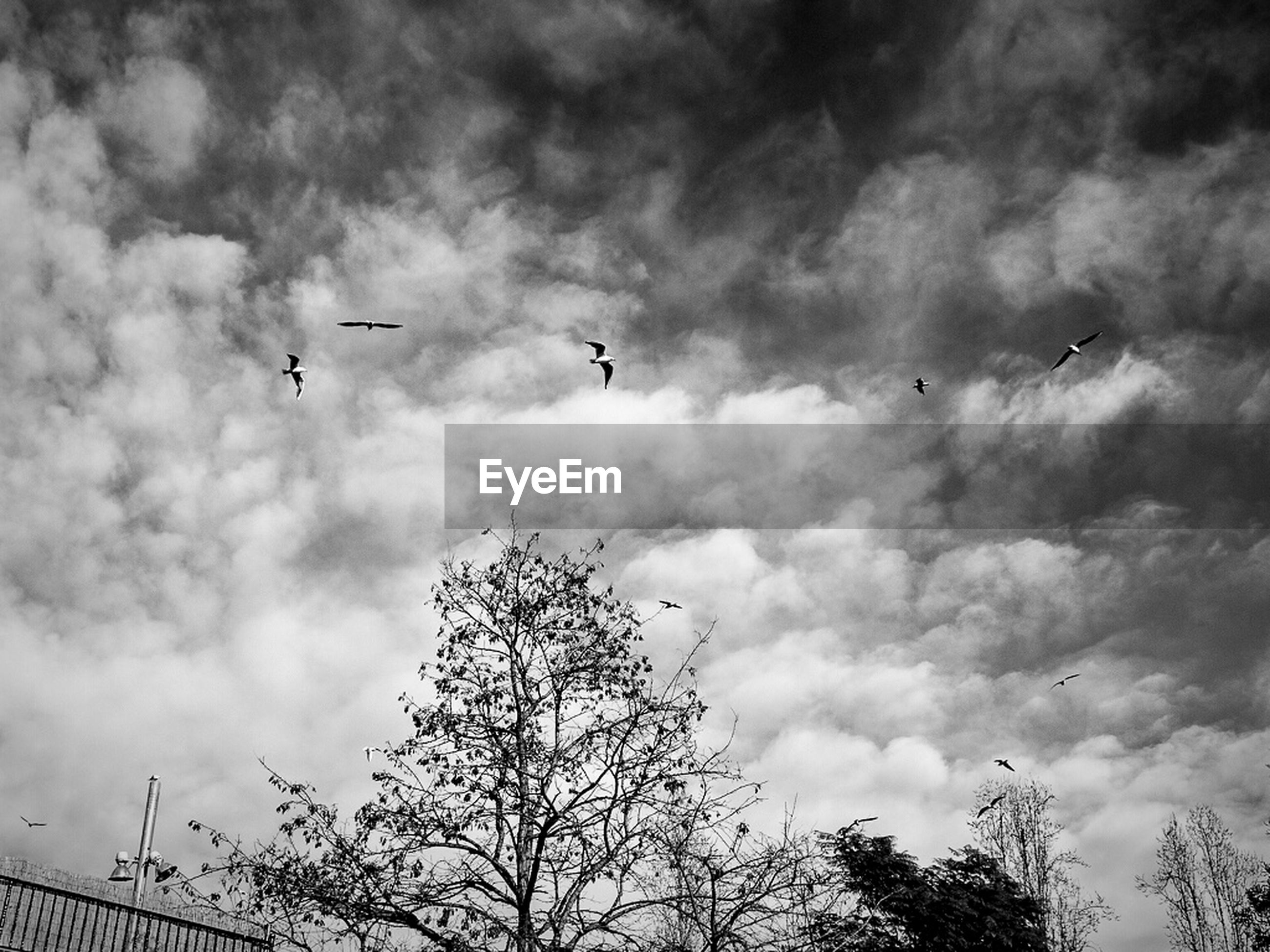 Low angle view of trees and birds against cloudy sky