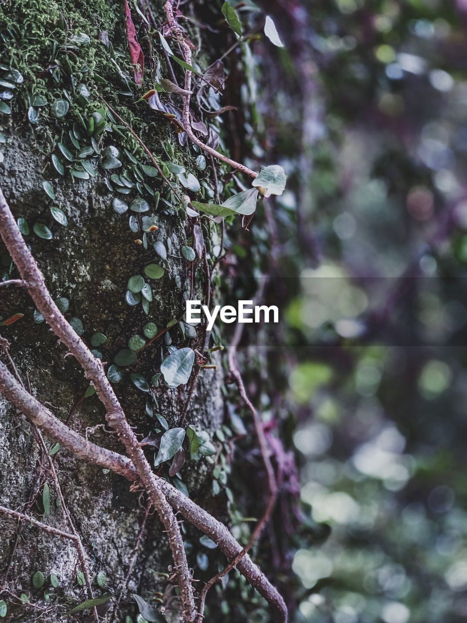 plant, tree, trunk, tree trunk, growth, focus on foreground, close-up, day, moss, nature, no people, forest, beauty in nature, branch, tranquility, outdoors, land, selective focus, green color, textured, lichen, bark